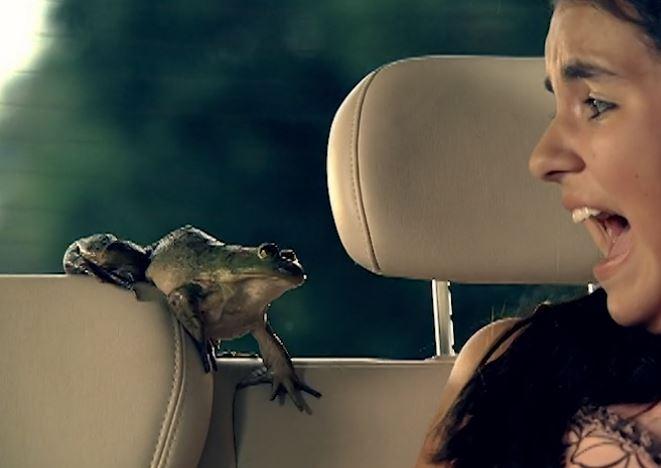 frog-vw